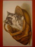 猫のポストカード 1910s 未使用