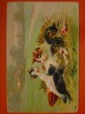 アンティーク 猫のポストカード 1911年