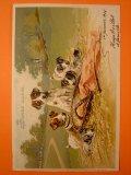 犬のポストカード 1904年
