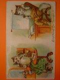 猫のポストカード 1900s 未使用