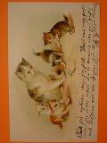 アンティーク 猫のポストカード 1903年